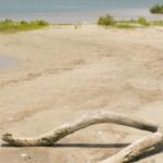 The Marooning of Francois Simars de Bellisle on the Texas Gulf Coast: Part One
